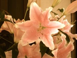 Lilies in Granville Market1